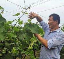 《走向我们的小康生活》陕西澄城县:职业农民季垒的绿色农业梦