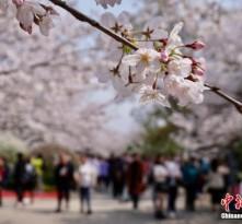 文旅部发布清明节假期出游提醒:抵制不合理低价游