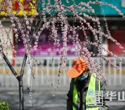 组图:春到渭南 风景别样美