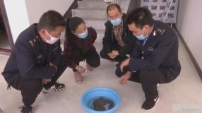 《保护秦岭野生动物资源 促进人与自然和谐》韩城:渔政林业联合执法放生娃娃鱼