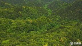 《保护秦岭野生动物资源 促进人与自然和谐相处》韩城:首次使用无人机对黄龙山褐马鸡国家级自然保护区开展采集信息工作