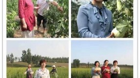 """直播带货丨 三级""""娘家人""""化身主播 为大荔消费扶贫农产品代言"""