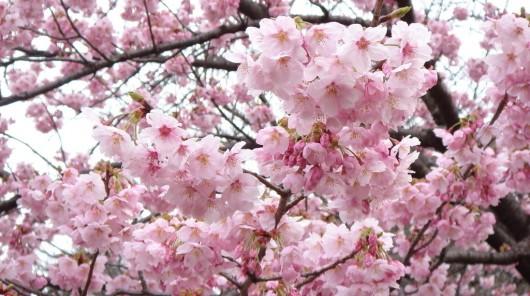 蒲城县第二届桃花节开幕