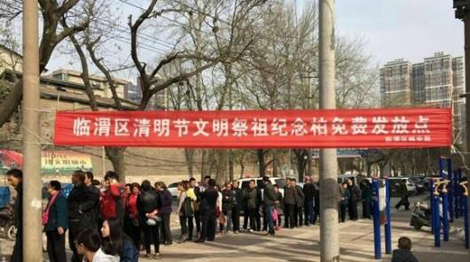 """清明节期间临渭区发放""""纪念柏""""树苗 市民可免费领取"""