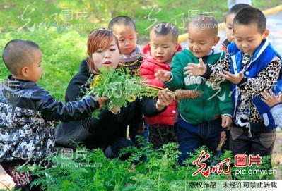 陕西潼关:幼儿园小朋友体验蔬菜种植