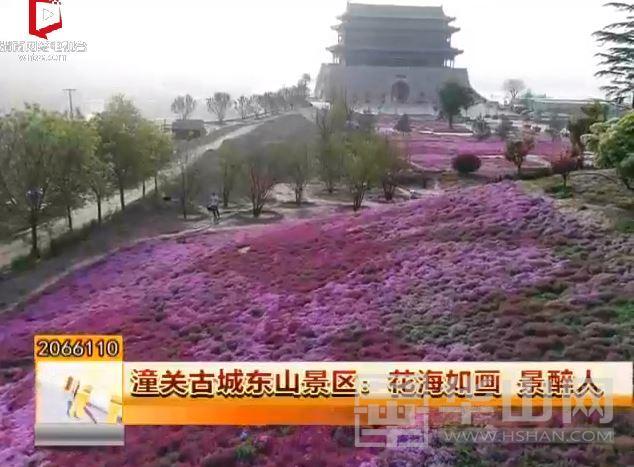 潼关古城东山景区:花海如画 景醉人