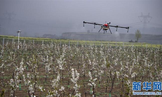陕西渭南:千亩现代樱桃园助力群众致富