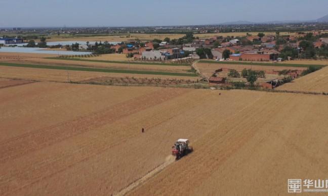 开镰收割!渭南市53万亩旱地小麦成熟 大面积收割预计在六月上旬进行