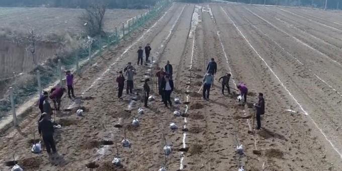 潼关顺风村:让集体和农户同增收 实现长久脱贫