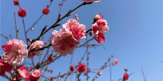 渭南:春到公园美景多