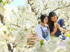 春暖大地桃花开 美丽仓东等你来