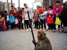 街头耍猴 :一种没落的民间技艺(组照)