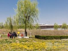 渭河生态公园春意浓 市民踏春游玩好去处