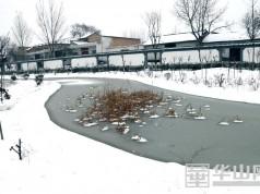 大荔韦林镇西池村涝池雪韵