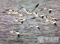 """""""爱鸟周""""活动启动,一起领略黄河湿地""""百鸟朝凤"""""""