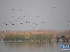 大荔黄河湿地景如画