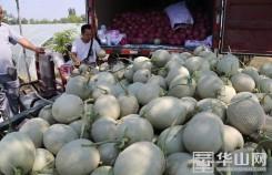 大荔80万亩时令水果陆续上市 又是一个丰产年
