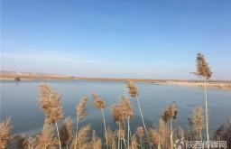 立春大荔黄河湿地美景