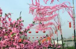 赏花 看文化展演 去大荔两宜镇桃花节
