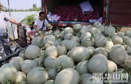 大荔80萬畝時令水果陸續上市 又是一個豐產年