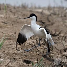 大荔林业部门加大湿地保护力度