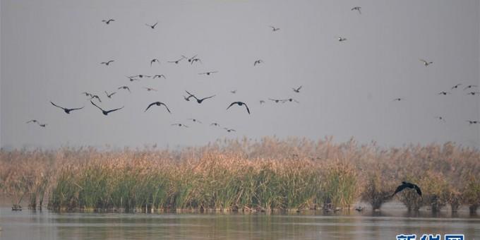大荔黃河濕地景如畫