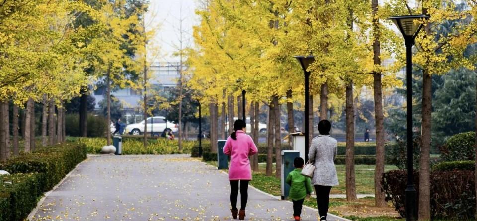 渭清公园美景如画,风光无限!