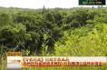 问政市林业局 华州区万亩林地未确权 村民难领公益林补偿金