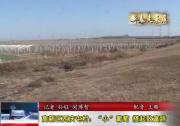"""高新區西慶屯村:""""小""""葡萄  搭起致富路"""
