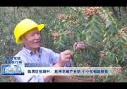 临渭区张胡村:延伸花椒产业链 小小花椒助脱贫