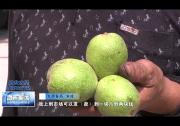 临渭区农机中心:技术扶贫助农富 小核桃卖出好价钱
