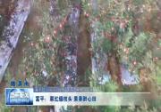 《瞰渭南》富平:翠红缀枝头 果香醉心田