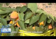 渭南:农业农村大变样 便捷舒适享安康