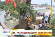白水:千年古树深陷地面被扶正后又倾斜 村民齐心协力再次救助