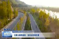 沿黄公路韩城段:秋风起韵银杏黄