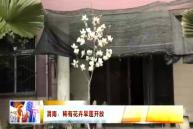 渭南:稀有花卉旱莲开放