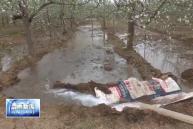 富平 白水:积极抗旱保丰收