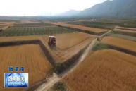 风吹麦浪庆丰收 富平10万亩小麦开镰