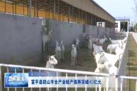 富平縣奶山羊全產業鏈產值將突破40億元