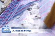 25万尾鱼苗放流黄河韩城段