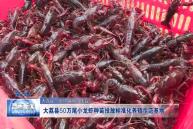大荔縣50萬尾小龍蝦種苗投放標準化養殖示范基地