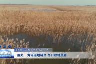 潼关:黄河湿地精灵 冬日独特美景