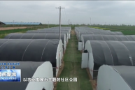 合阳县乾落社区:新规划新产业 乡村振兴开新局