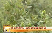 赏乡野秋色 品农家金银花鸡汤
