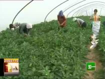 富平:地头市场让菜农乐开怀