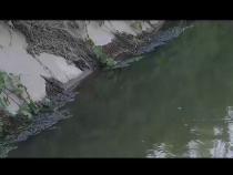 污水排放如此直接 坏了环境伤了人心