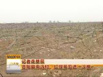 """合阳县南沟村:红提葡萄进""""冷棚"""""""