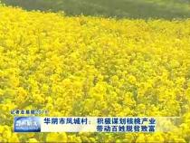 华阴市凤城村:积极谋划核桃产业 带动百姓脱贫致富