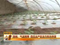 蒲城:气温骤降 西瓜主产区全力防冻保苗