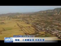 蒲城:小麦翻金浪 丰收在望